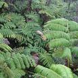 熱帯雨林の減少